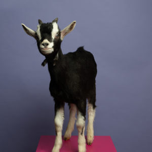 Goat Grotto